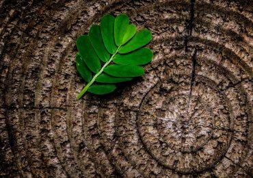 Novos apoios para instalações de biomassa em Portugal