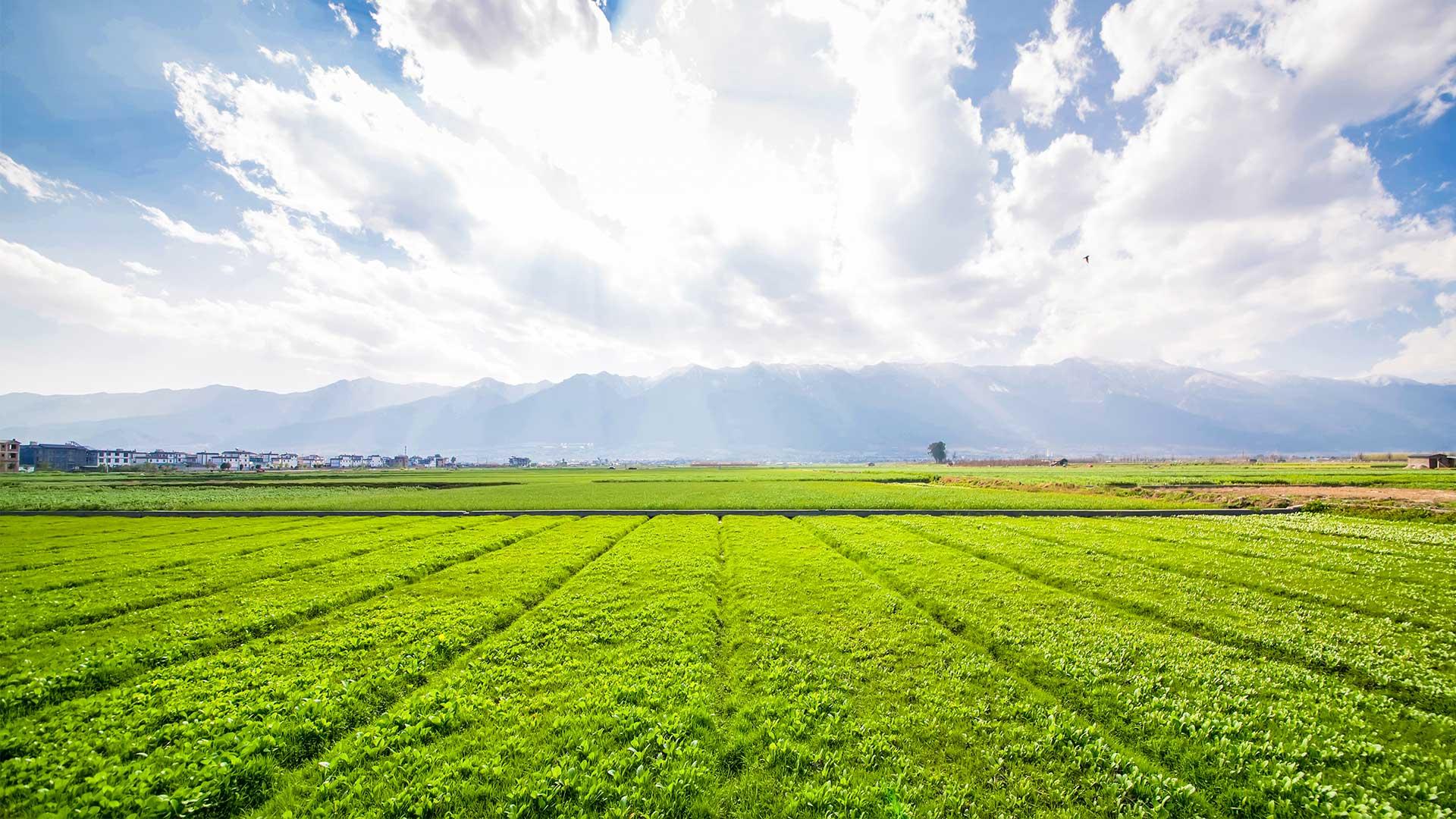 Estratégia de sustentabilidade alimentar