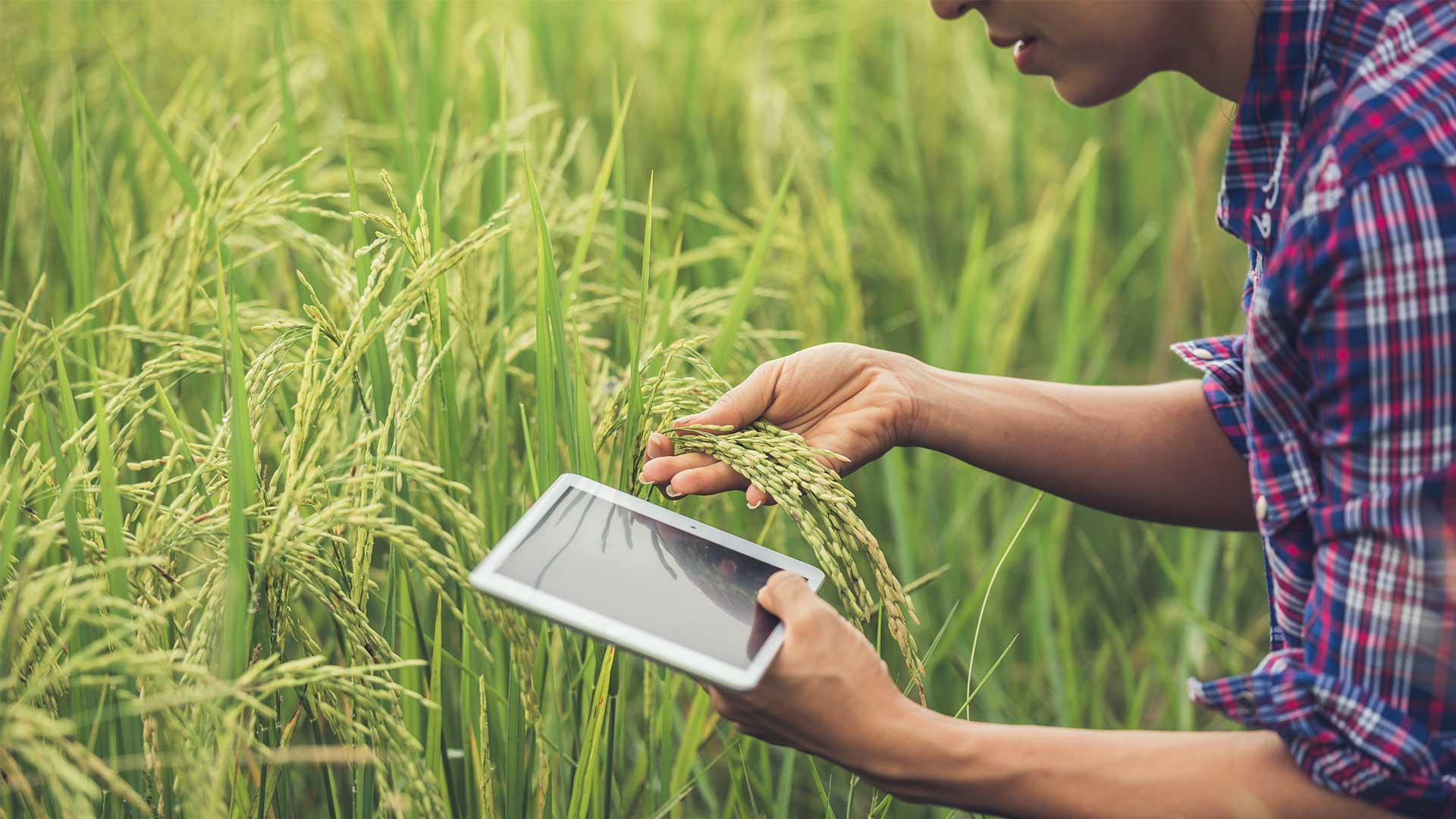 PDR: Candidaturas abertas para jovens agricultores!